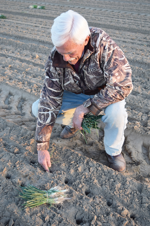 Danny Bowen checks the soil moisture conditions during planting in early December 2016.
